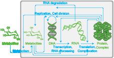 Archetypal bacterium (Random whole-cell model generator)