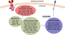 Homo sapiens cancer signaling (MCF10A)